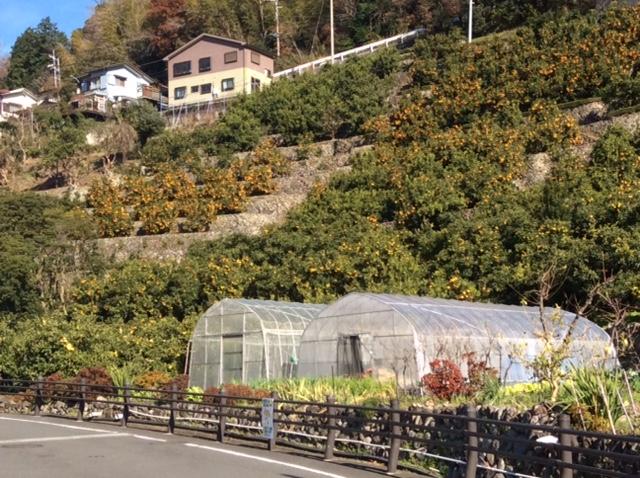 水信 野菜チャンネル 農園訪問